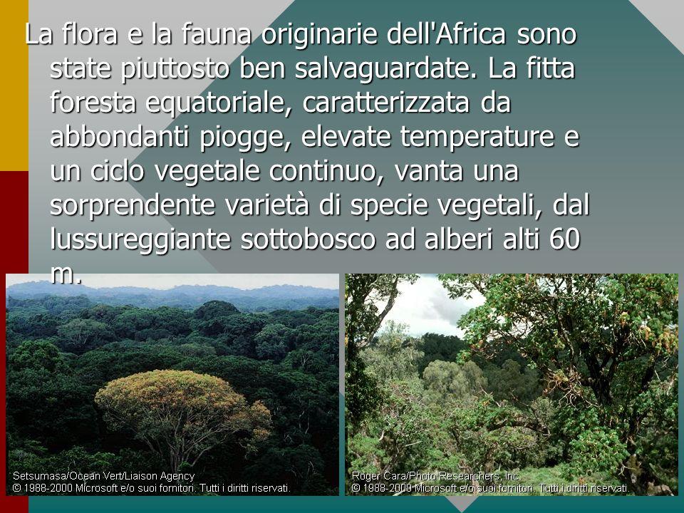 La flora e la fauna originarie dell Africa sono state piuttosto ben salvaguardate.