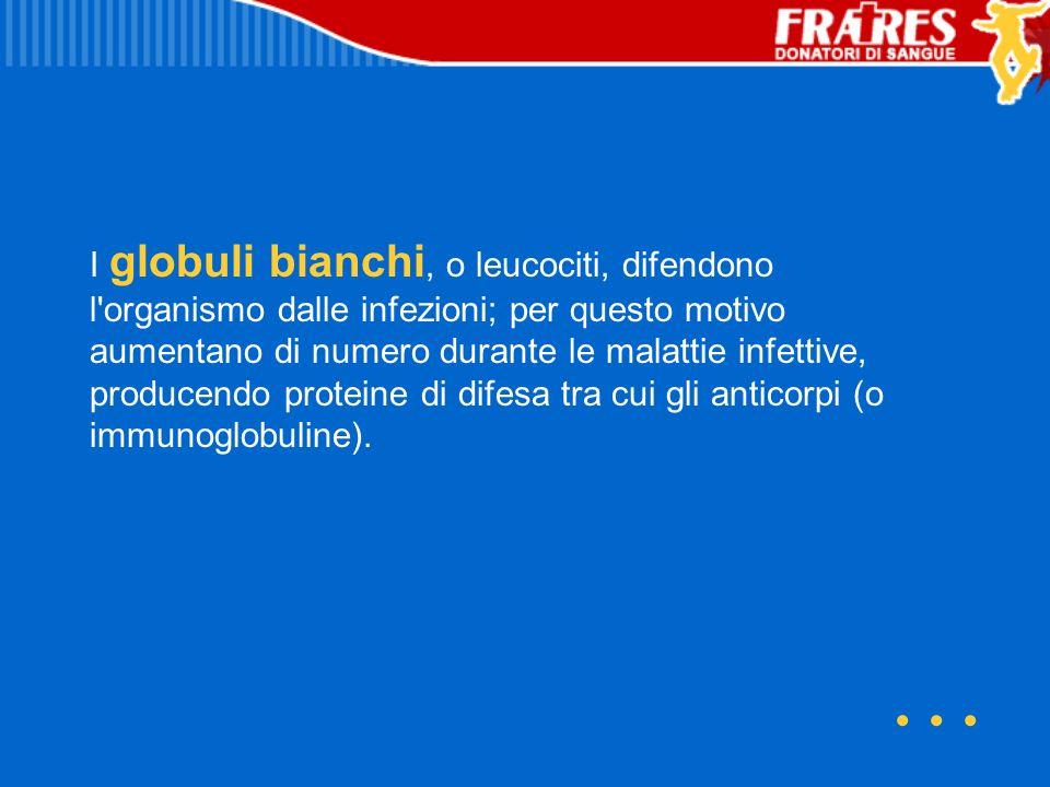 I globuli bianchi, o leucociti, difendono l organismo dalle infezioni; per questo motivo aumentano di numero durante le malattie infettive, producendo proteine di difesa tra cui gli anticorpi (o immunoglobuline).