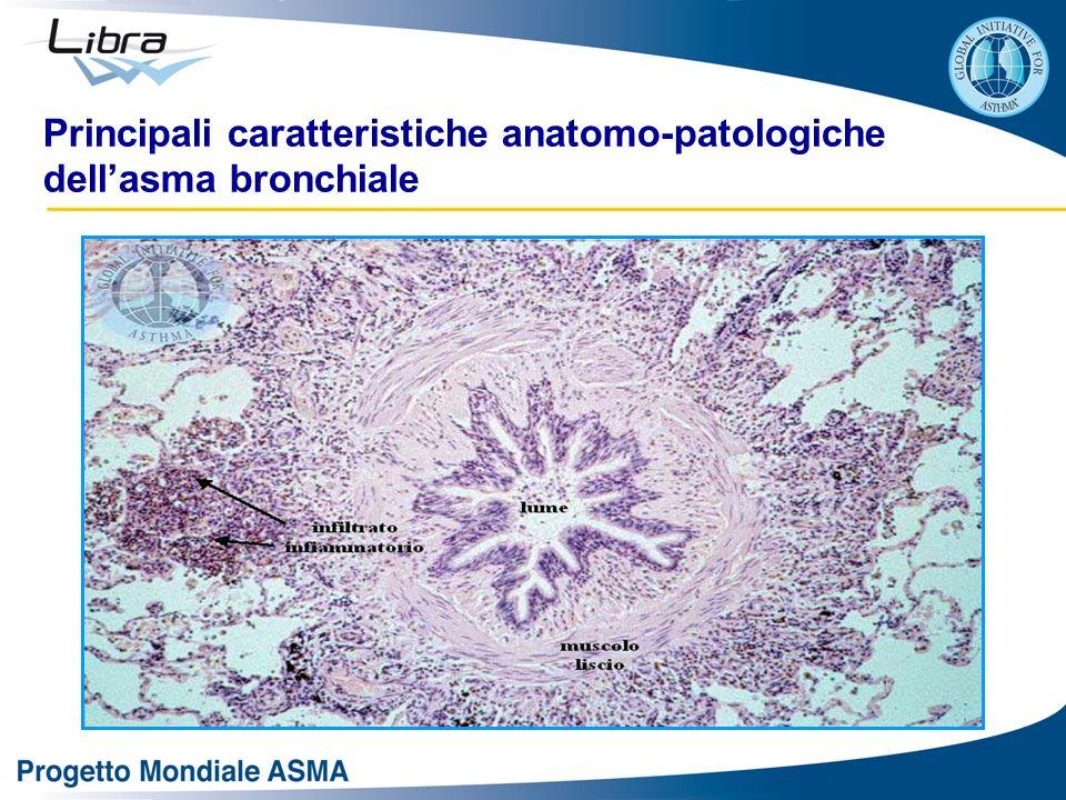 Principali caratteristiche anatomo-patologiche dell'asma bronchiale