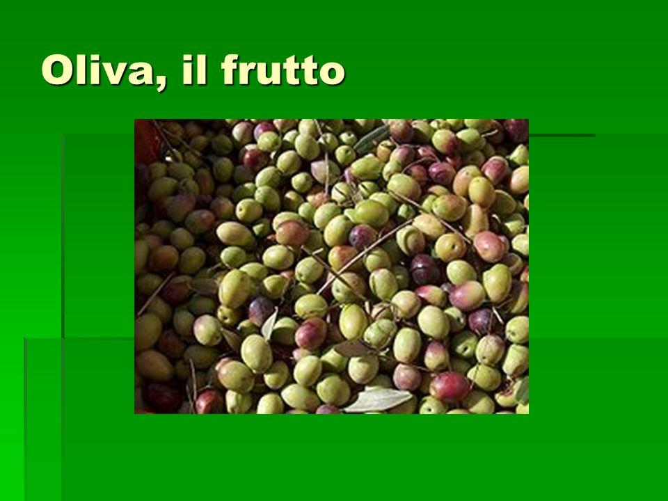 Oliva, il frutto