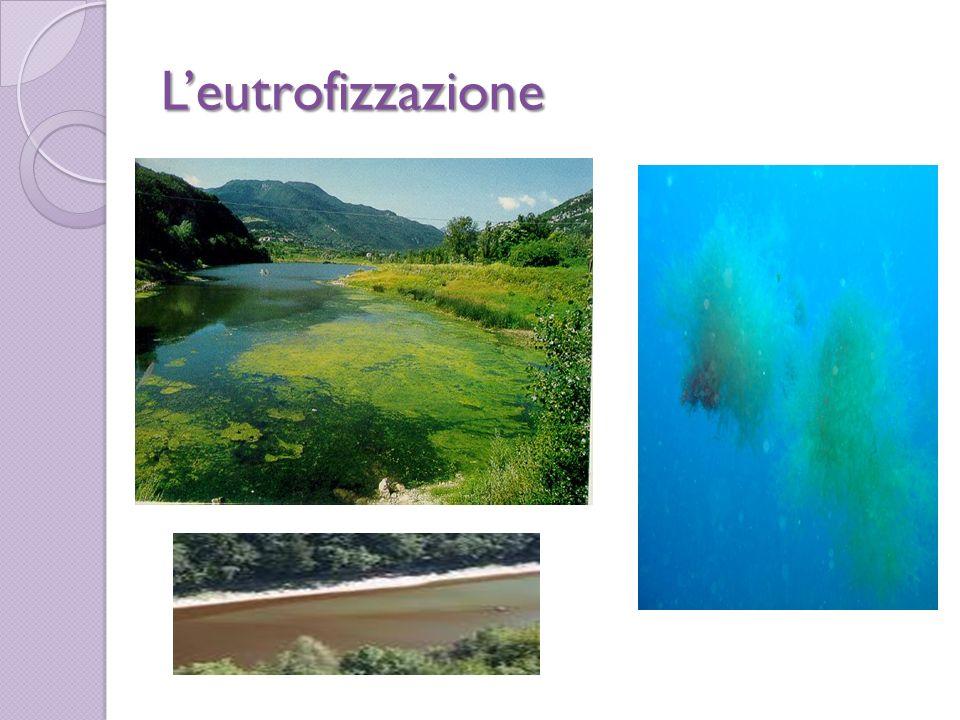 L'eutrofizzazione