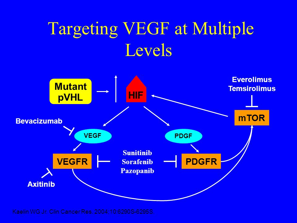 Targeting VEGF at Multiple Levels