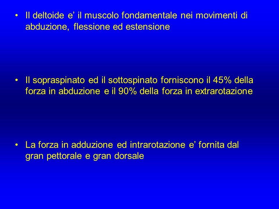 Il deltoide e' il muscolo fondamentale nei movimenti di abduzione, flessione ed estensione