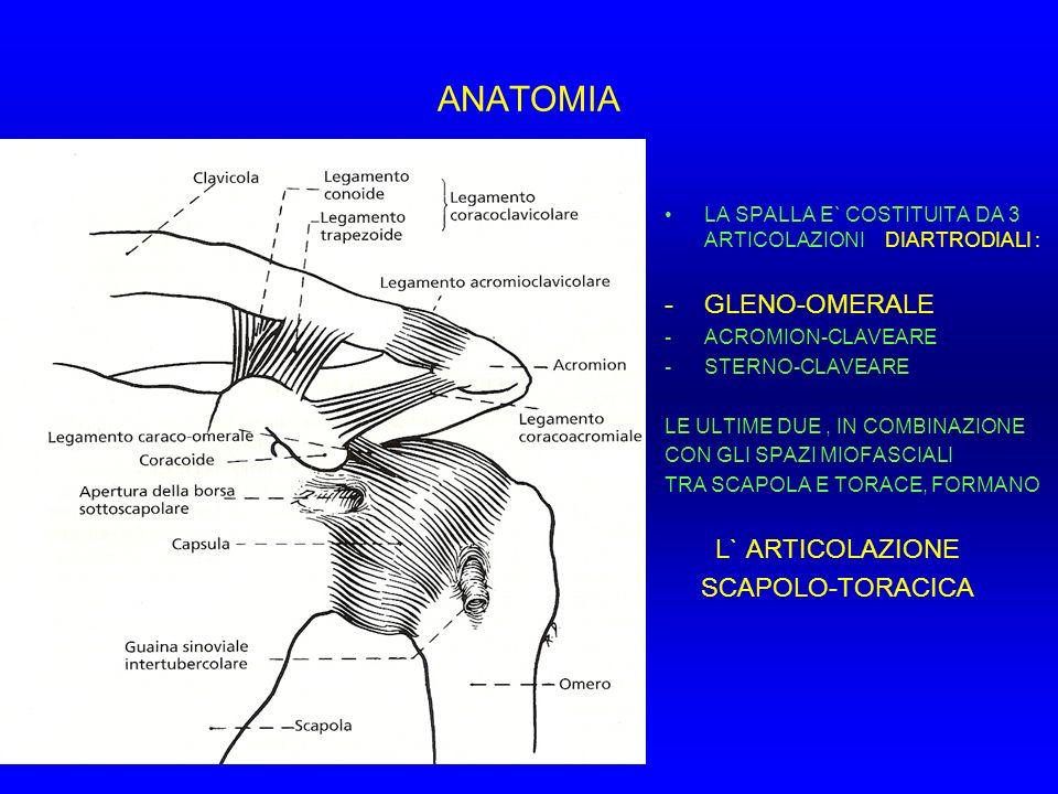 ANATOMIA GLENO-OMERALE SCAPOLO-TORACICA