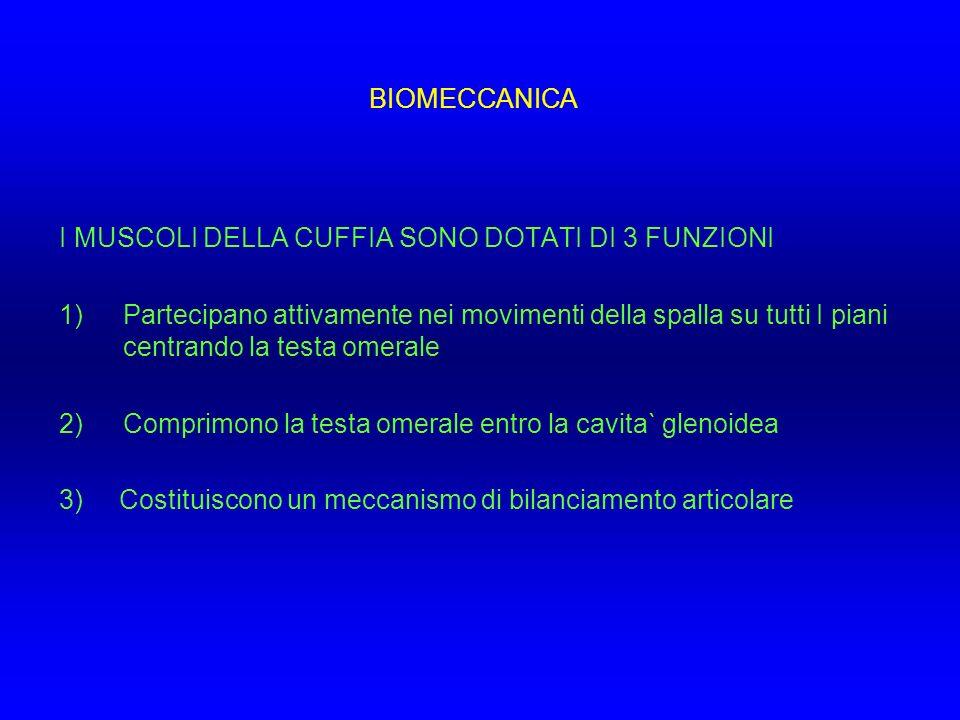 BIOMECCANICA I MUSCOLI DELLA CUFFIA SONO DOTATI DI 3 FUNZIONI.