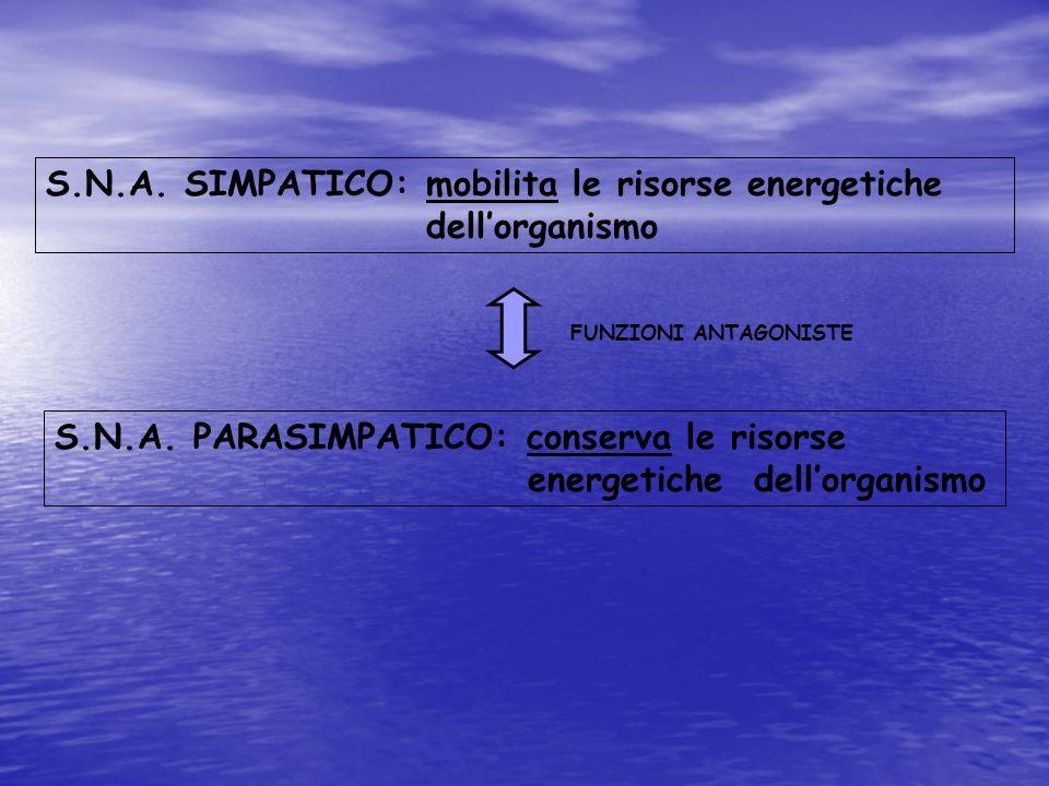 S.N.A. SIMPATICO: mobilita le risorse energetiche dell'organismo