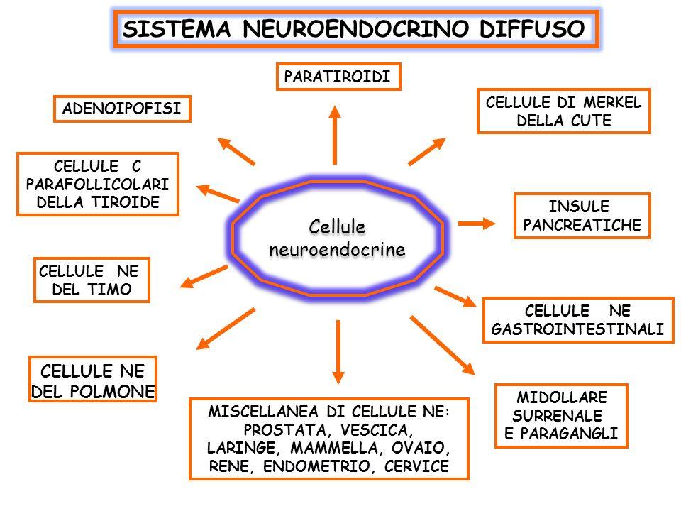 SISTEMA NEUROENDOCRINO DIFFUSO