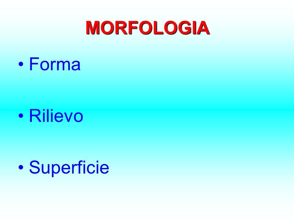 MORFOLOGIA Forma Rilievo Superficie