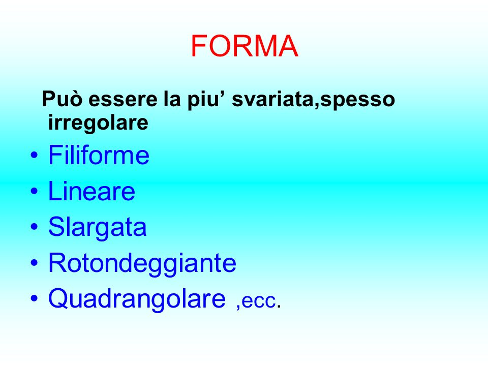 FORMA Filiforme Lineare Slargata Rotondeggiante Quadrangolare ,ecc.
