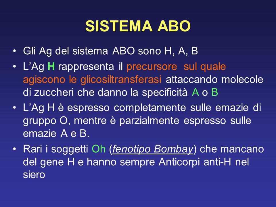 SISTEMA ABO Gli Ag del sistema ABO sono H, A, B