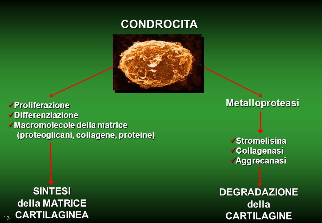 CONDROCITA Metalloproteasi SINTESI DEGRADAZIONE della MATRICE della