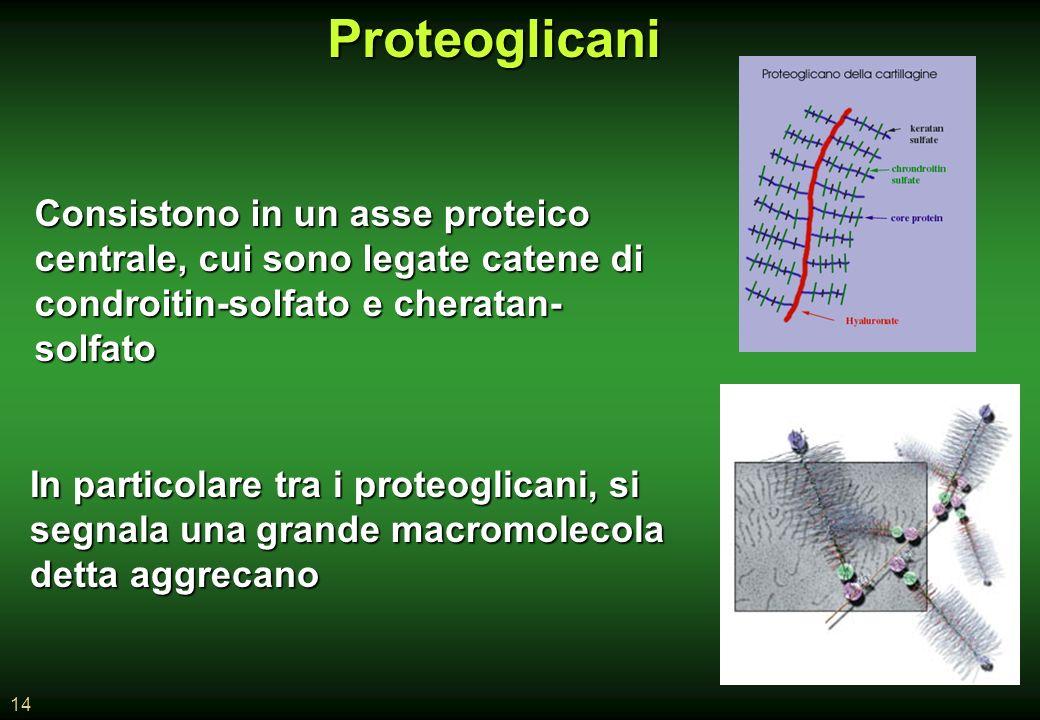 Proteoglicani Consistono in un asse proteico centrale, cui sono legate catene di. condroitin-solfato e cheratan-solfato.