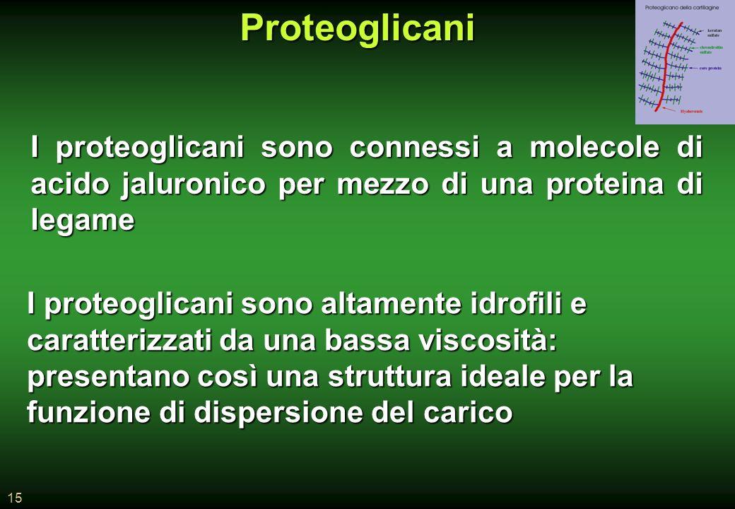 Proteoglicani I proteoglicani sono connessi a molecole di acido jaluronico per mezzo di una proteina di legame.