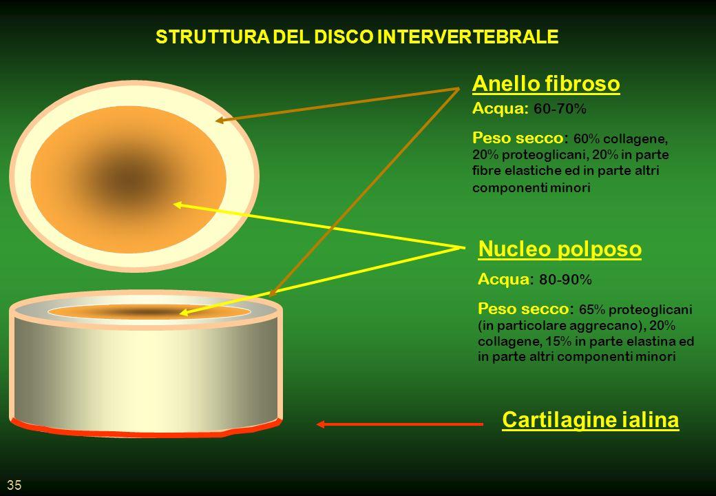 STRUTTURA DEL DISCO INTERVERTEBRALE