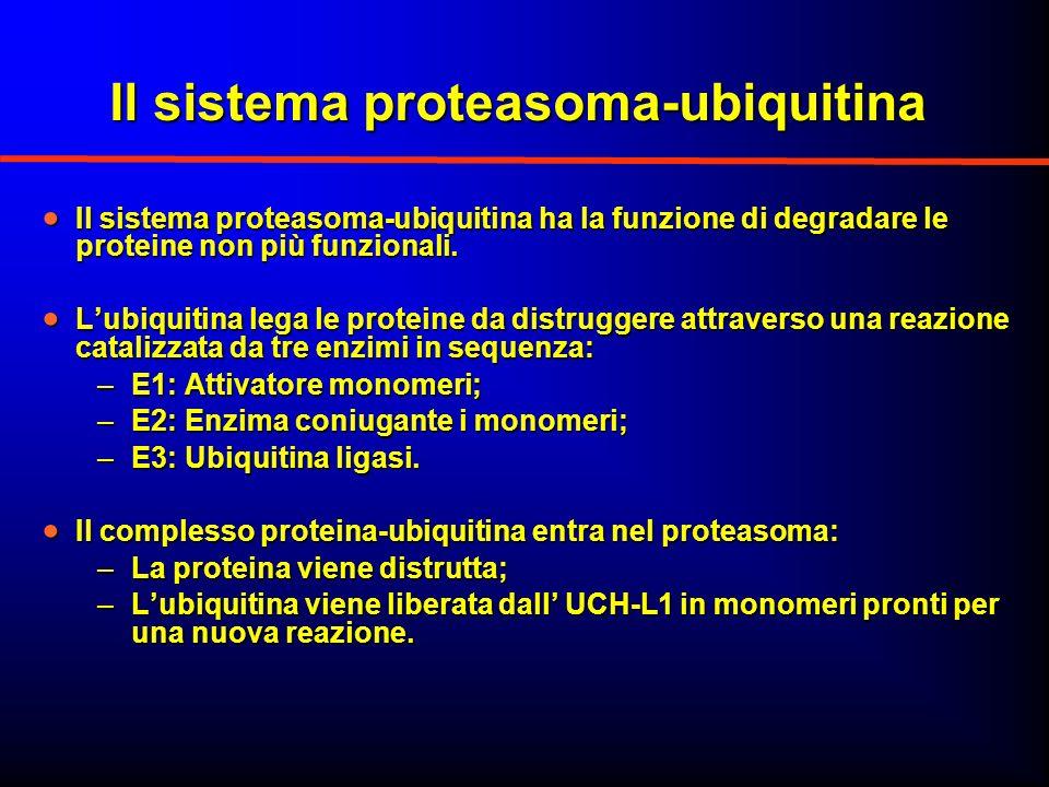 Il sistema proteasoma-ubiquitina