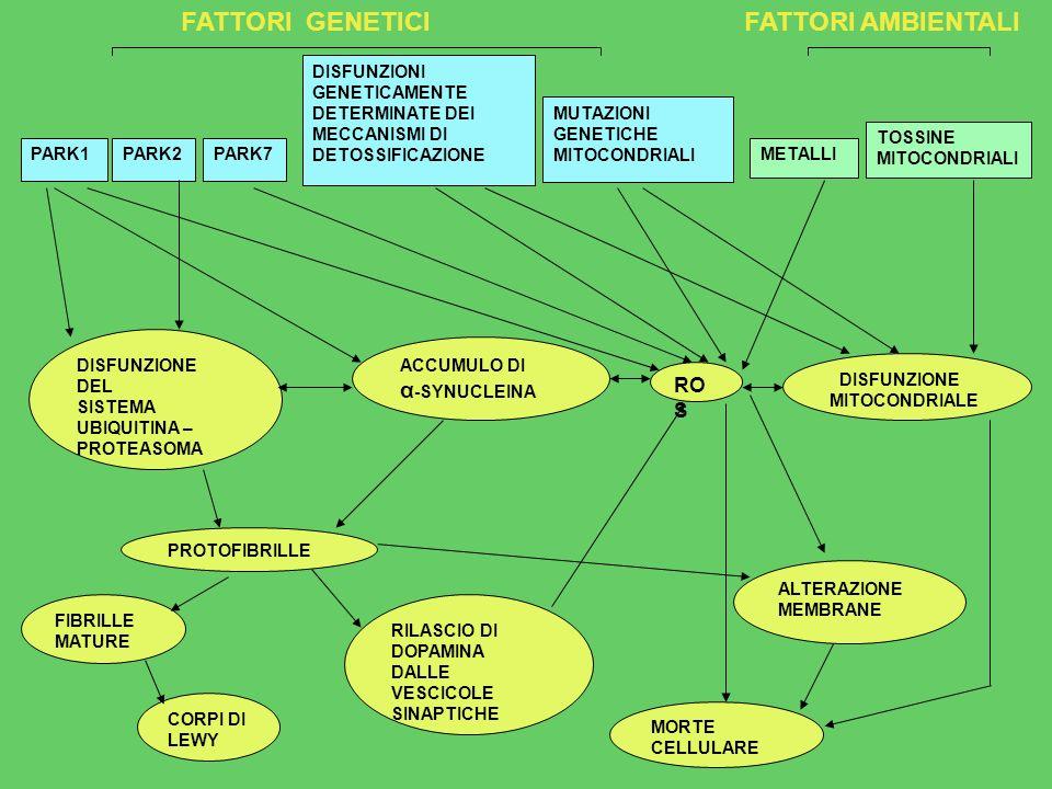 α-SYNUCLEINA ROS FATTORI GENETICI FATTORI AMBIENTALI DISFUNZIONI
