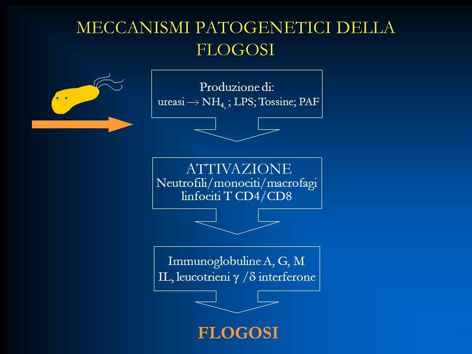 MECCANISMI PATOGENETICI DELLA FLOGOSI