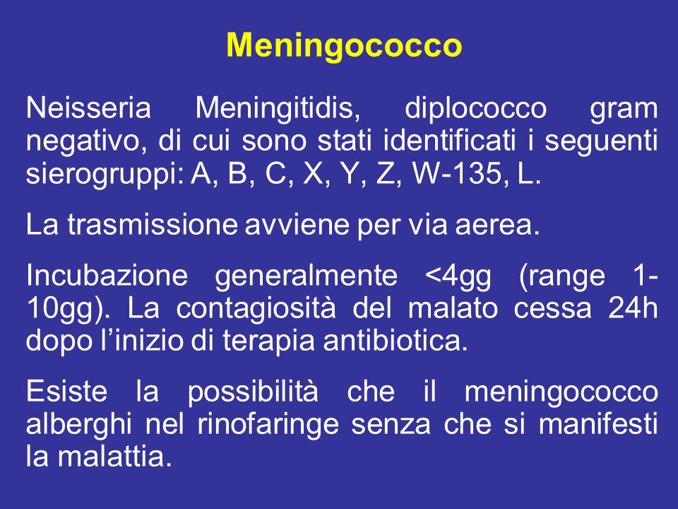 Meningococco Neisseria Meningitidis, diplococco gram negativo, di cui sono stati identificati i seguenti sierogruppi: A, B, C, X, Y, Z, W-135, L.