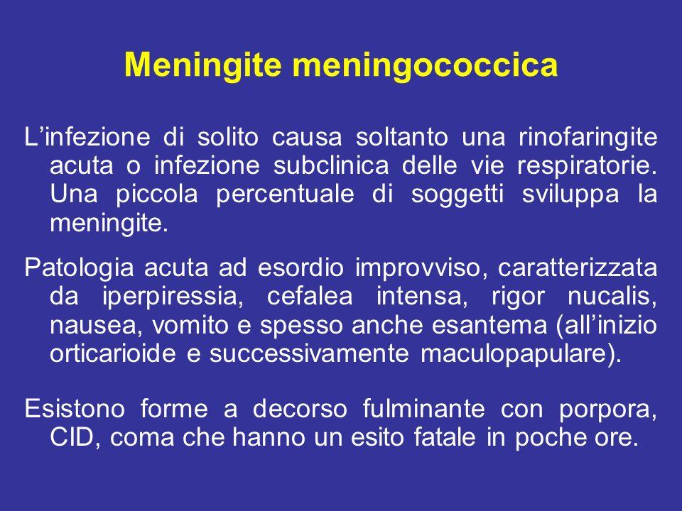 Meningite meningococcica