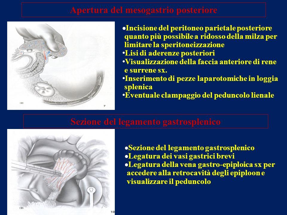 Apertura del mesogastrio posteriore