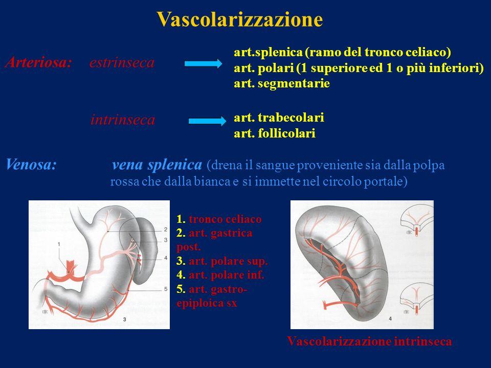 Vascolarizzazione Arteriosa: estrinseca intrinseca