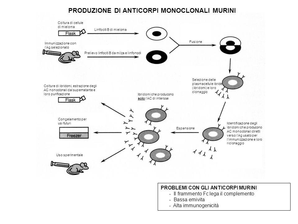 PRODUZIONE DI ANTICORPI MONOCLONALI MURINI