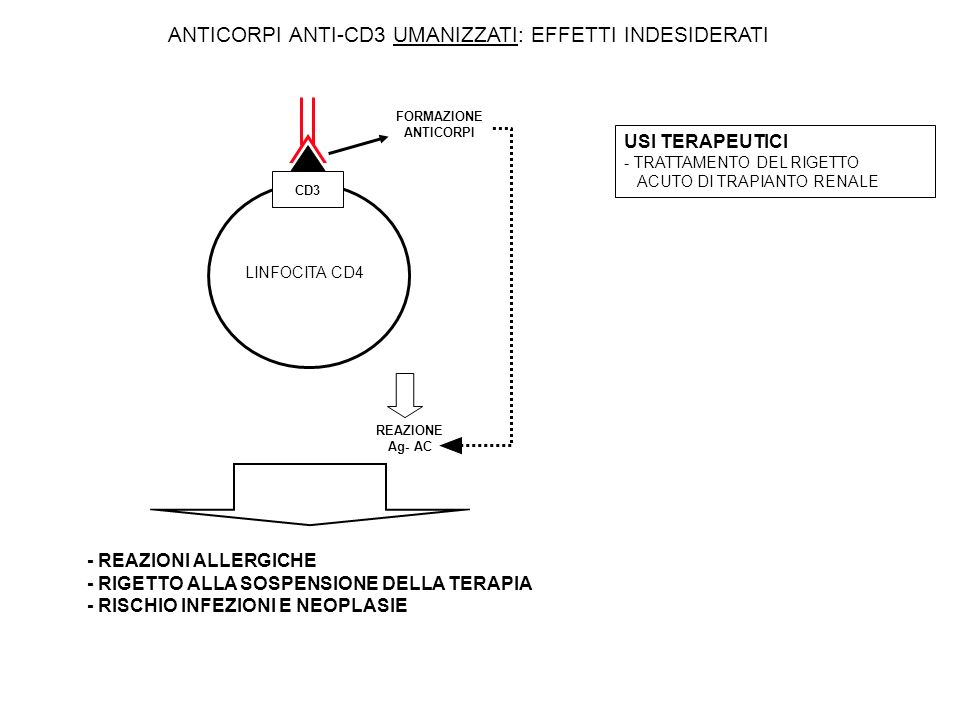 ANTICORPI ANTI-CD3 UMANIZZATI: EFFETTI INDESIDERATI