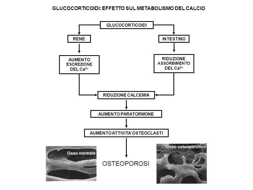 OSTEOPOROSI GLUCOCORTICOIDI: EFFETTO SUL METABOLISMO DEL CALCIO