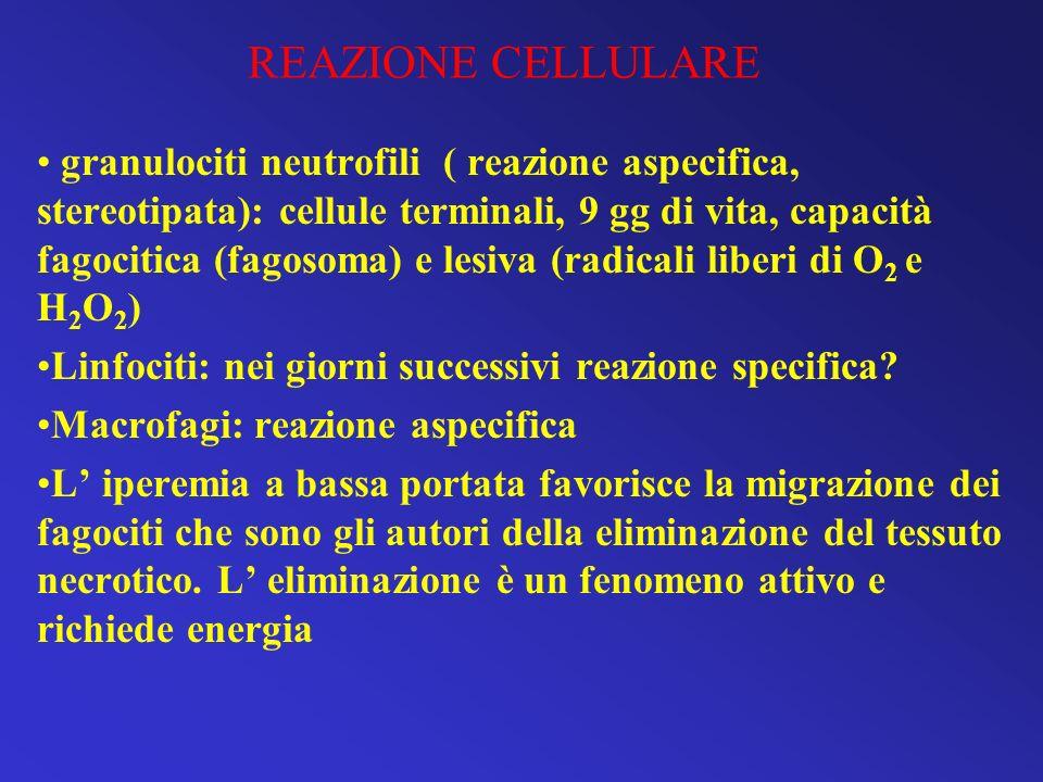 REAZIONE CELLULARE