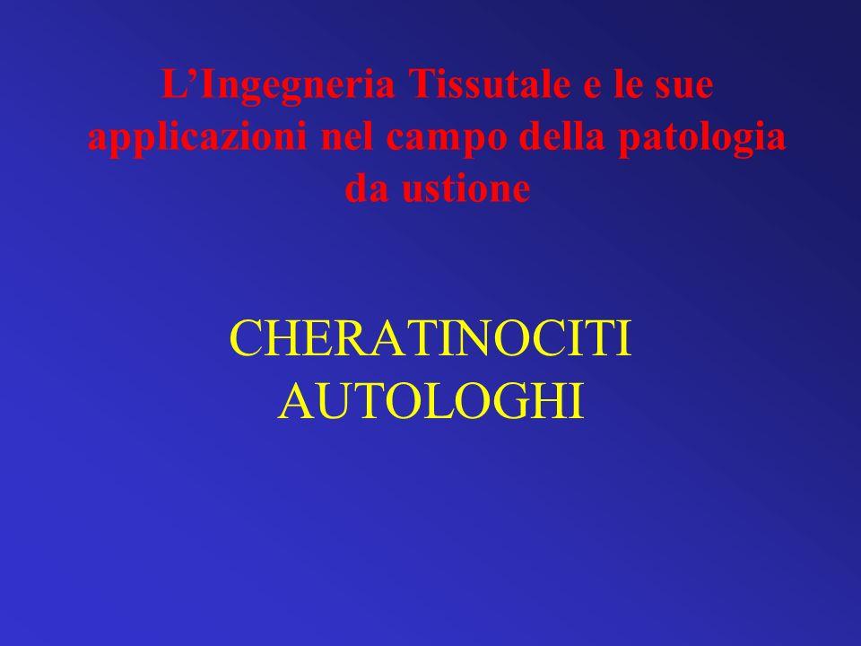 CHERATINOCITI AUTOLOGHI