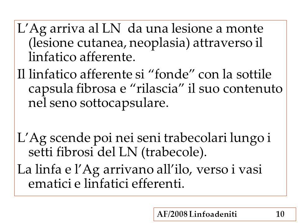 L'Ag arriva al LN da una lesione a monte (lesione cutanea, neoplasia) attraverso il linfatico afferente.