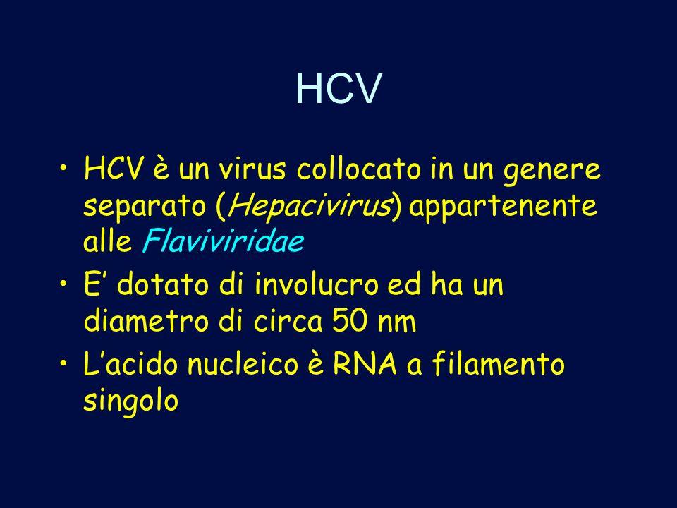 HCV HCV è un virus collocato in un genere separato (Hepacivirus) appartenente alle Flaviviridae.
