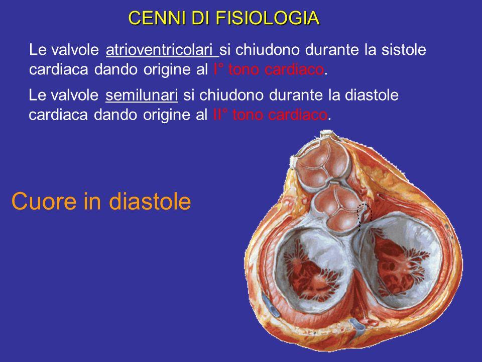 Cuore in sistole Cuore in diastole CENNI DI FISIOLOGIA