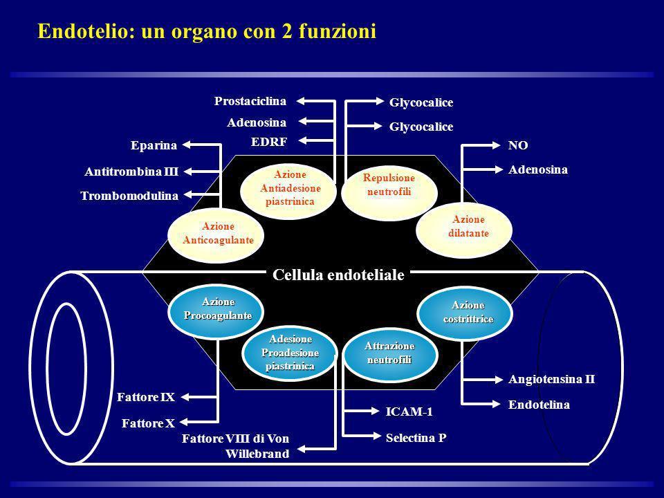 Endotelio: un organo con 2 funzioni