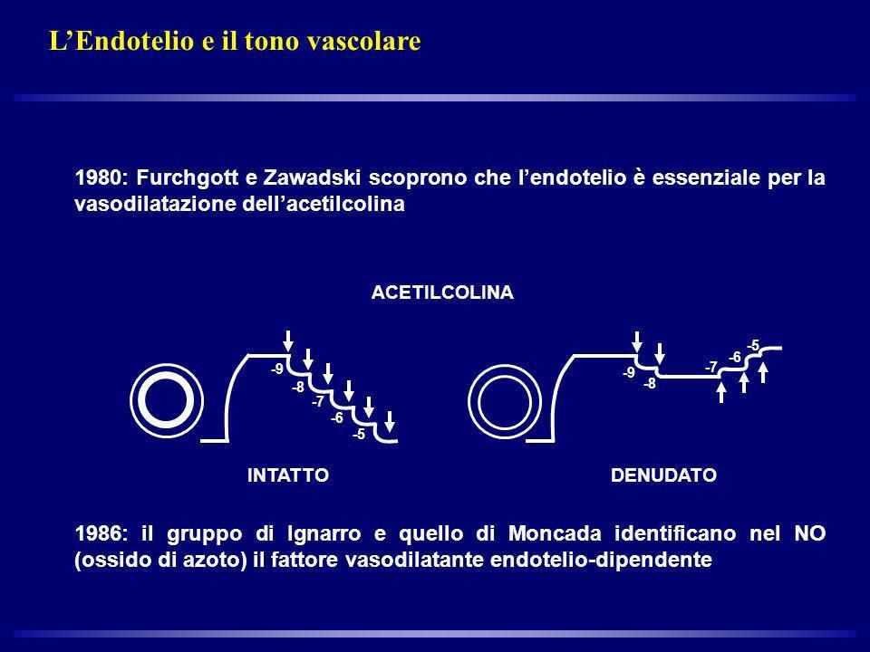 L'Endotelio e il tono vascolare