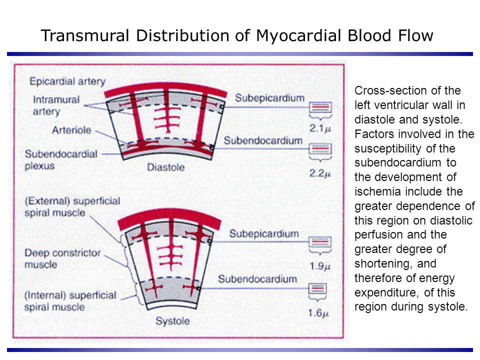 Transmural Distribution of Myocardial Blood Flow
