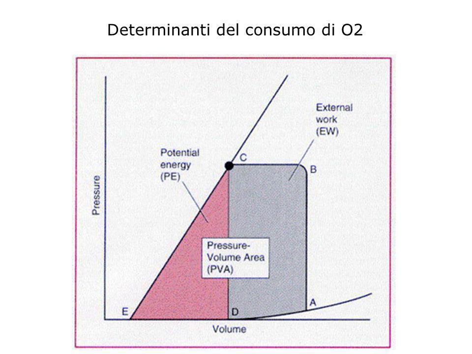 Determinanti del consumo di O2