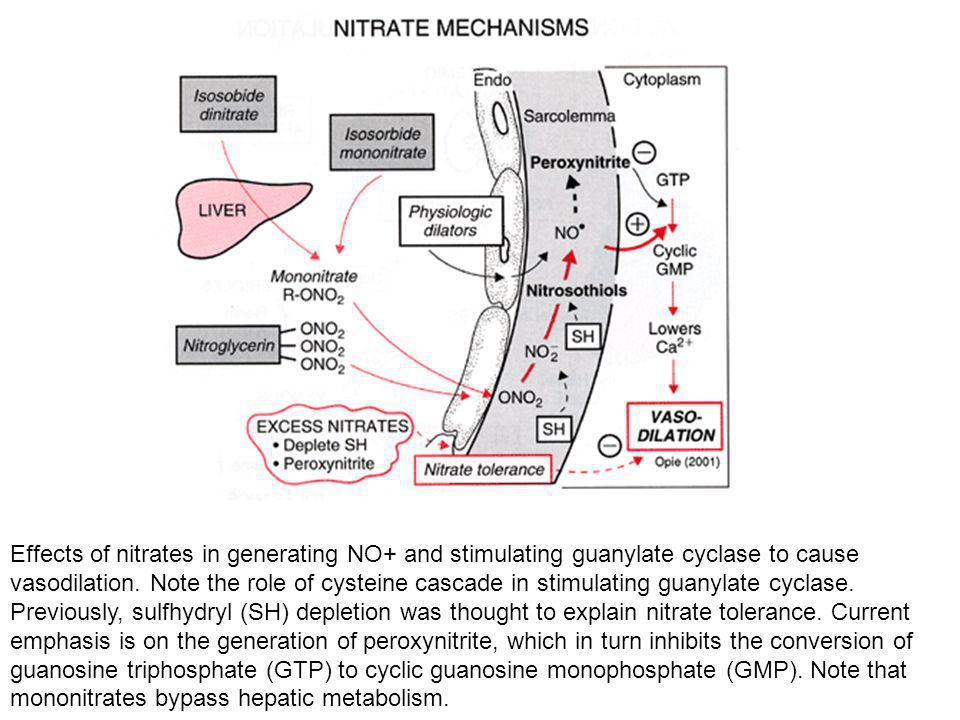 Effects of nitrates in generating NO+ and stimulating guanylate cyclase to cause vasodilation.