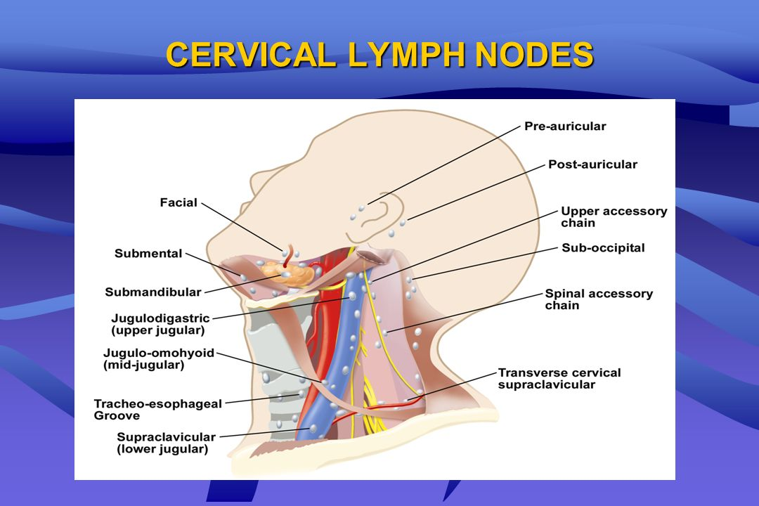 CERVICAL LYMPH NODES