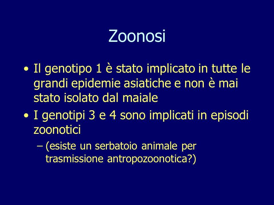 Zoonosi Il genotipo 1 è stato implicato in tutte le grandi epidemie asiatiche e non è mai stato isolato dal maiale.