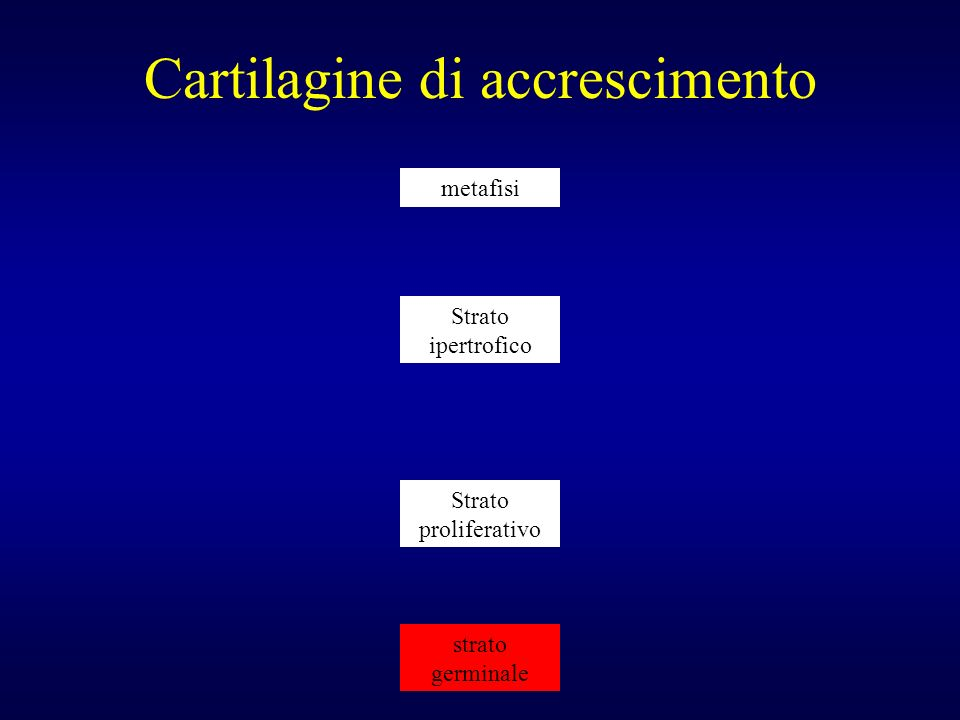 Cartilagine di accrescimento