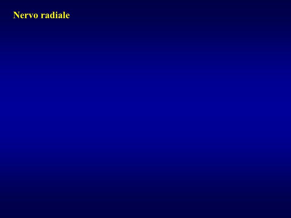 Nervo radiale