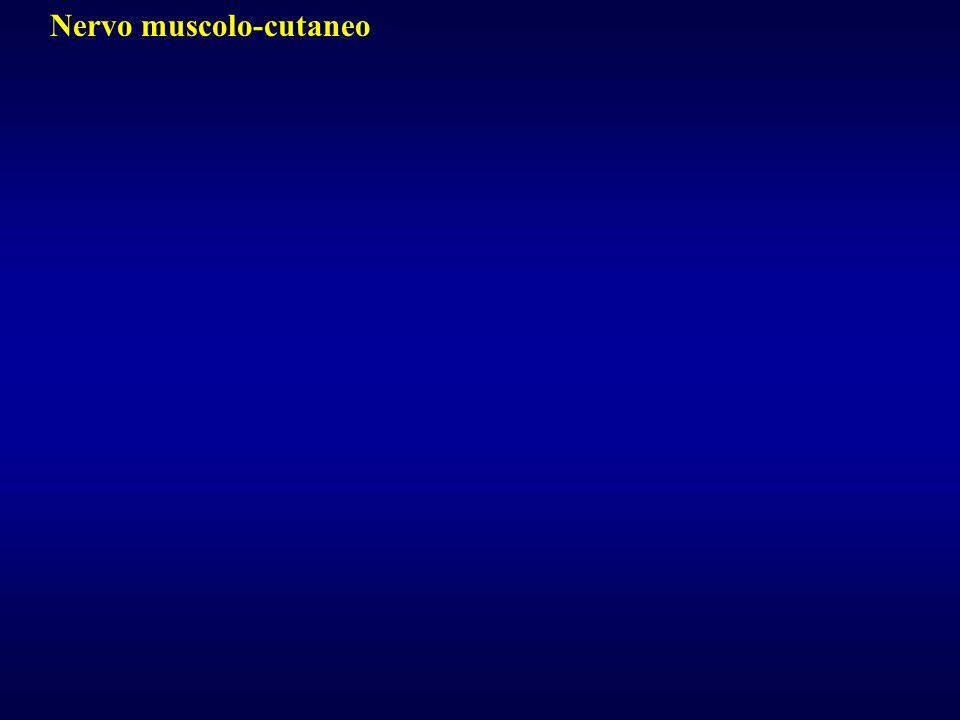 Nervo muscolo-cutaneo
