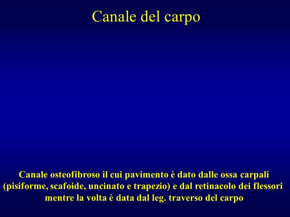 Canale del carpo Canale osteofibroso il cui pavimento è dato dalle ossa carpali.