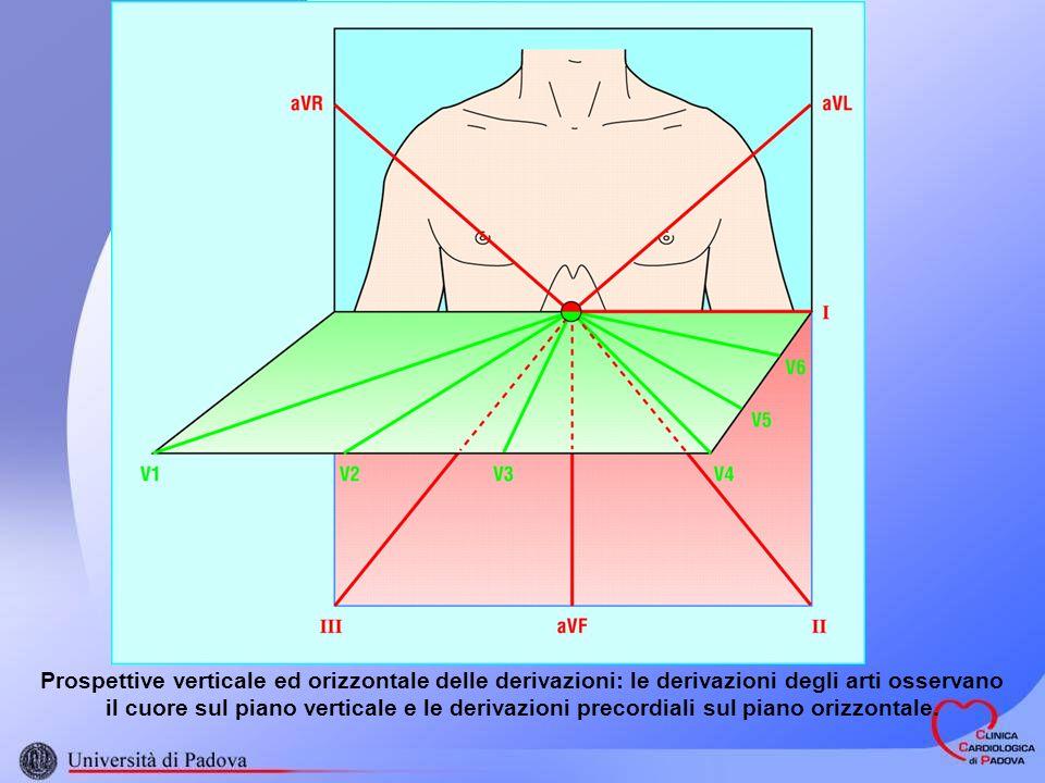 Prospettive verticale ed orizzontale delle derivazioni: le derivazioni degli arti osservano il cuore sul piano verticale e le derivazioni precordiali sul piano orizzontale.
