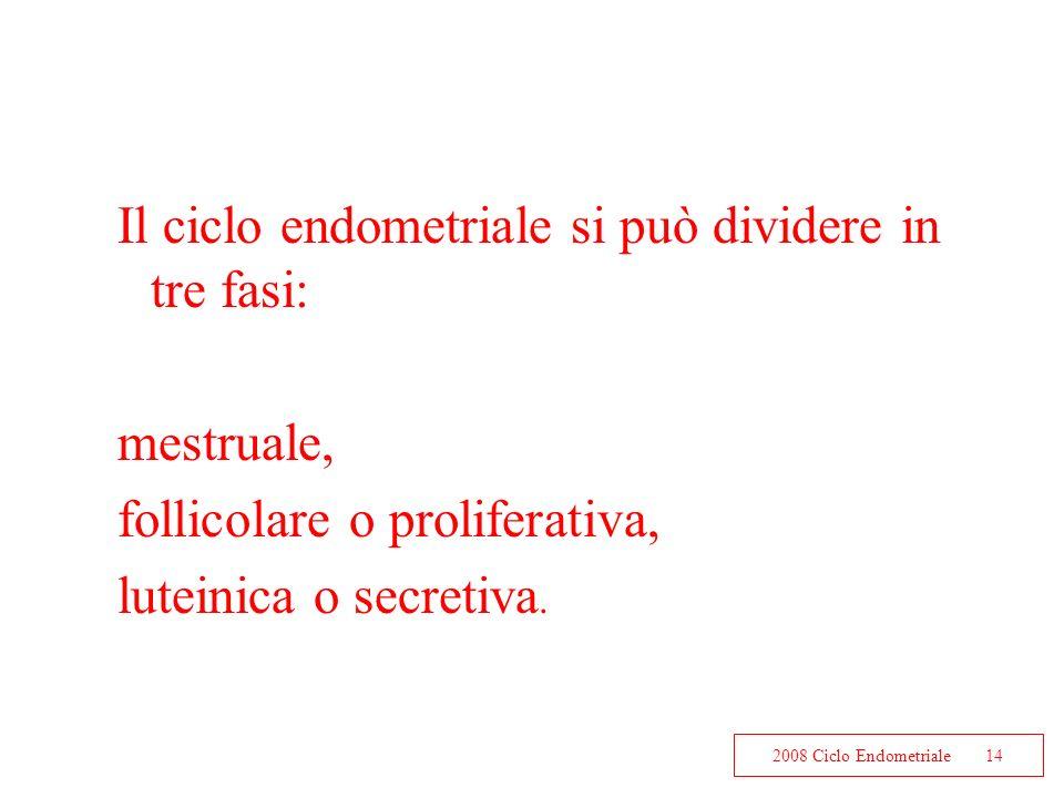 Il ciclo endometriale si può dividere in tre fasi: