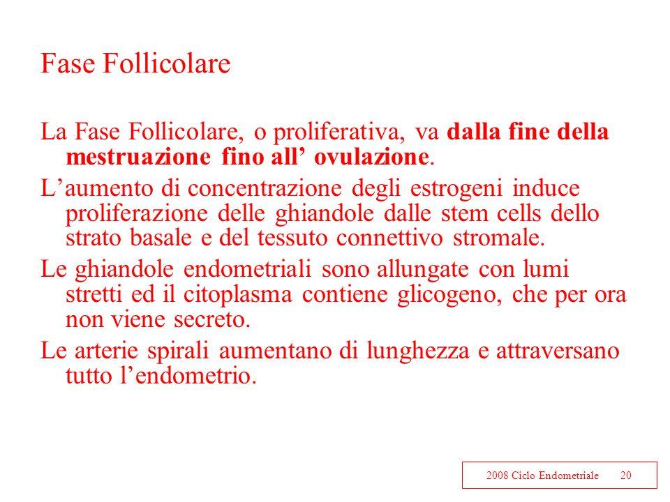 Fase Follicolare La Fase Follicolare, o proliferativa, va dalla fine della mestruazione fino all' ovulazione.