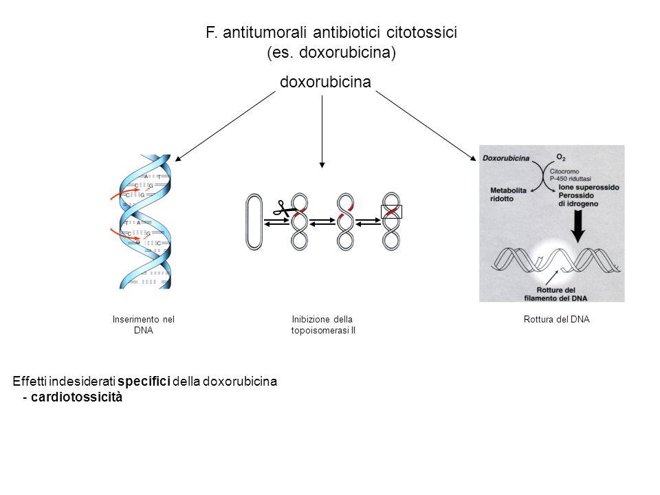  F. antitumorali antibiotici citotossici (es. doxorubicina)