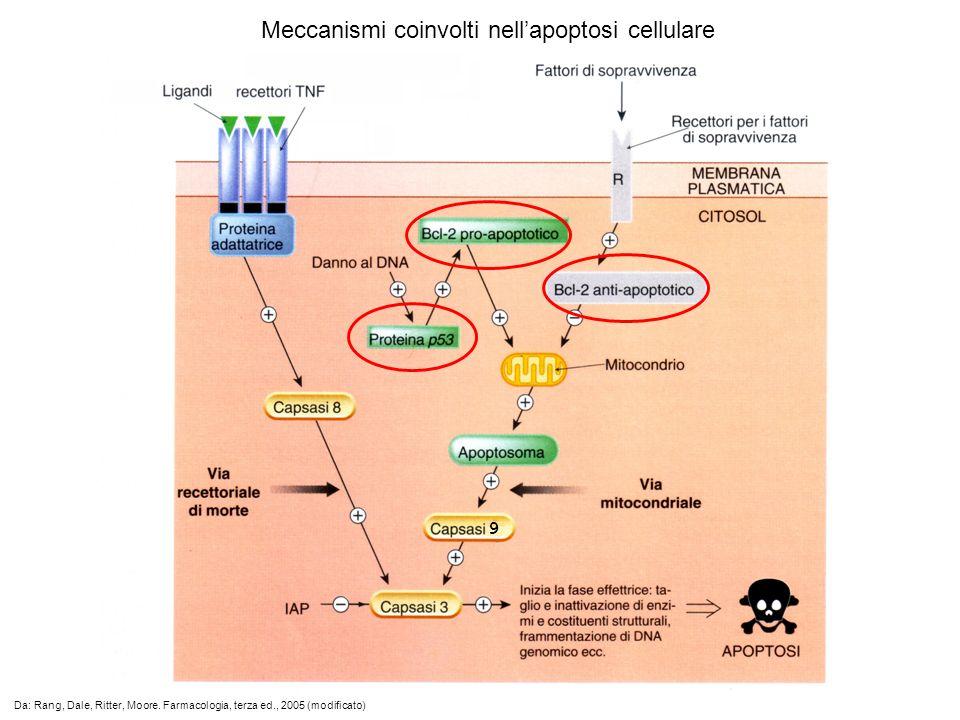 Meccanismi coinvolti nell'apoptosi cellulare