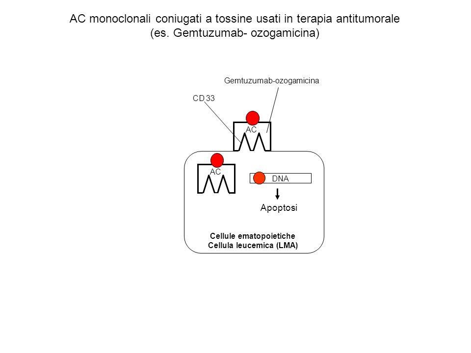 Cellule ematopoietiche Cellula leucemica (LMA)